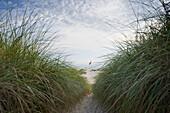 Beach and German flag, sandbank, near Nebel, Amrum, North Frisian Islands, Schleswig-Holstein, Germany