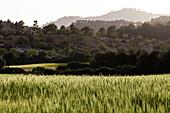Hügellandschaft, Wiesen und Getreidefelder im Abendlicht, Es Capdella, Mallorca, Spanien
