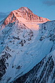 A high mountain peak, the Bietschhorn, in the afterglow, Canton Wallis, Valais, Switzerland, Europe