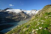 Alpine meadow in front of Gauli glacier and lake Gaulisee, lake Gaulisee, UNESCO World Heritage Site Swiss Alps Jungfrau-Aletsch, Bernese Alps, Bernese Oberland, Bern, Switzerland