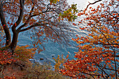 Trees at the steep coast in autumn, Jasmund National Park, Baltic coast, Ruegen island, Mecklenburg Western Pomerania, Germany, Europe