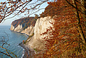 Chalk cliffs in autumn, Schnaks shore, Jasmund National Park, Baltic coast, Ruegen island, Mecklenburg Western Pomerania, Germany, Europe