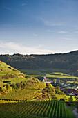 Hills and vineyards at Vogtsburg, Kaiserstuhl, Baden-Wuerttemberg, Germany, Europe