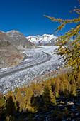 Aletsch Glacier and Aletsch Forest, UNESCO World Heritage site, Canton of Valais, Switzerland, Europe