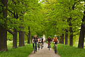 Cyclists in an alley of oaks, Muensterland, North Rhine-Westphalia, Germany, Europe
