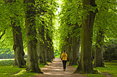 Woman walking through an alley of lime trees, Hamburg, Germany, Europe