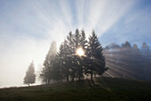 Spruces, sunbeams breaking through the fog, Berchtesgaden region, Berchtesgaden National Park, Upper Bavaria, Germany, Europe