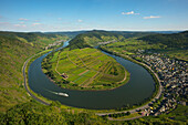 View from the vineyard Bremmer Calmont to the sinuosity, near Bremm, Mosel river, Rhineland-Palatinate, Germany
