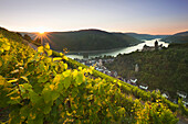 View from the vineyards to Bacharach with Stahleck castle, Rhine river, Rhineland-Palatinate, Germany