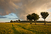 Thunderclouds over a grainfield, Egge mountains, North Rhine-Westphalia, Germany