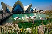 Oceanografic aquarium, City of Arts and Sciences by Santiago Calatrava  Valencia  Comunidad Valenciana, Spain.