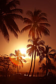 Port Douglas, Queensland, Australia, palms, sun, Sundown, sunset, Sunset, romantic, pair, couple, beach, seashore, seafront, promenade, car, automobile, back light, picturesque, idyllic. Port Douglas, Queensland, Australia, palms, sun, Sundown, sunset, Su