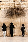 Jewish boys praying at the Western Wall Wailing Wall, Jewish Quarter, Old City, Jerusalem, Israel