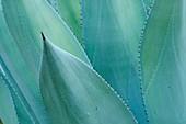 Plants, Desert Garden, Balboa Park, San Diego, California