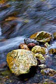 Rocks in a riverbed