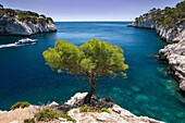 Tour boat sailes past lone pine tree growing out of solid rock in the Calanques near Cassis, Provence France