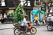 A man transporting a Christmas tree on a motorbike