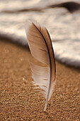 Feather Sticking Upright in Sand