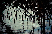 Tree Branches Over Water, Silhouette