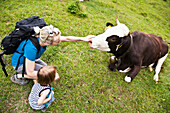 Woman with child petting a cow, Kloaschau Valley, Bayrischzell, Bavaria, Germany