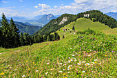 View from the Vorderkaiserfelden Hut towards the Inn Valley, mountain flowers in summer, Kaiserschuetzensteig, Kaiser Valley, Kufstein, Tirol, Austria