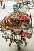 Women transporting live poultry on a moped in Hoi An, central Vietnam, Vietnam, Asia