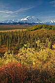 Scenic of Fall tundra and yellow Aspen trees with Mt. Mckinley in the background near Wonder Lake campground, Denali National Park, Alaska