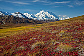 Scenic view of Mt.McKinley from Thorofare Pass with colorful Autumn tundra in the foreground, Denali National Park, Interior Alaska