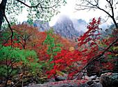cheonbuldongvalley, Seorak Mountain, Yuseondae