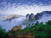 Mt.JuWang