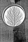 Bare Tree Trhough Round Window