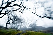 Low Angle And Blurry View Of Eerie Tree Silhouettes