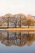 Cumbria, England, Lake Scenic With Autumn Trees Reflected In Water