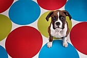 Portrait Of Dog With Colorful, Circular Rugs