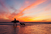 A Surfer Walks In Shallow Water With Her Dog At Sunset, Tarifa Cadiz Andalusia Spain
