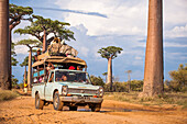 Overloaded vehicle driving down a dirt road lined with baobab trees, Madagascar, Africa
