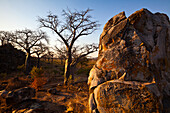 Evening scene with a rock and baobab trees, Malawi, Africa