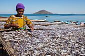 A woman drying fish, Matemba or Usiba, Chembe village, Lake Malawi, Malawi, Africa
