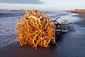 blocked for illustrated books in Germany, Austria, Switzerland: Driftwood on Hokitika Beach with tree roots, Hokitika, West Coast, South Island, New Zealand