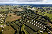 blocked for illustrated books in Germany, Austria, Switzerland: aerial of kiwifruit orchards, Bay of Plenty, North Island, New Zealand