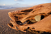 Driftwood with stone on the beach, Haast, West Coast, South Island, New Zealand