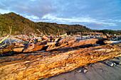 Driftwood on the beach, West Coast, South Island, New Zealand