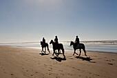 Reiter zu Pferde am Sandstrand, Reitsport, gemeinsames Ausreiten morgens am Strand, Ostküste bei Christchurch, Südinsel, Neuseeland