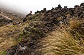 Trek through volcanic terrain, Tongariro Alpine Crossing, Great Walk, Tongariro National Park, World Heritage, North Island, New Zealand