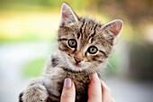 Hand holding a kitten, Styria, austria