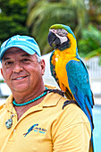 Local bird entertainer Jim with his parrot Bob, Key West, Florida Keys, Florida, USA