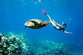 Hawaii, Maui, Green Sea Turtle (Chelonia mydas) Honu and free diver.