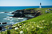 Oregon, Central Coast, Yaquina Head historic lighthouse and natural wilderness Area.