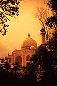 India, Taj Mahal at dusk, orange skies and dark trees.