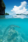 Palau, Rock Islands, Saltwater crocodile perched on the coral.